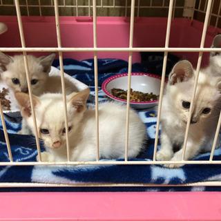 白猫ちゃん4匹