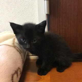 黒猫メス 里親さん募集します