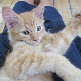 優しい里親さんが見つかりました!  - 猫