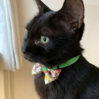 なでるとフミフミ✨おだやかでのんびり~な黒猫ゆうな