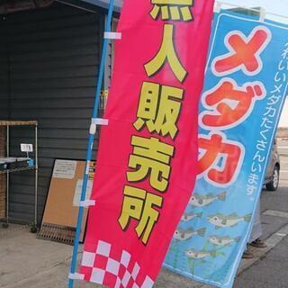 1匹10円💰メダカ😃めだか😃水槽・睡蓮鉢・水草 - 上越市