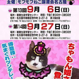 9/27(日)猫の譲渡会 in 名古屋市瑞穂生涯学習センター