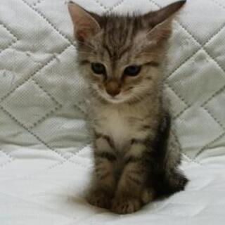 元気な子猫4匹です。よろしくお願いします。