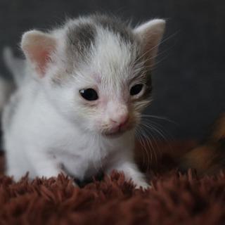 生後約1ヶ月未満の男の子