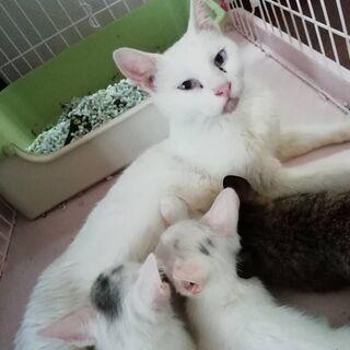 4匹の仲良し親子猫、里親さん募集です!