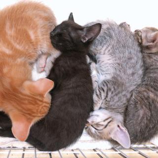 【トライアル決定✨】親子で捨てられた黒猫ちゃん