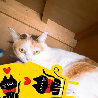 成猫の画像