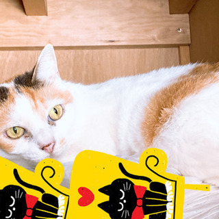 成猫 - 伊勢崎市