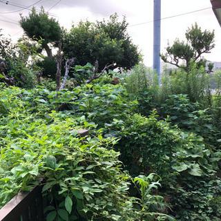 草刈り、庭の剪定、その他の雑作業