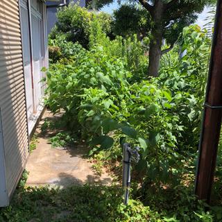 庭の手入れ、空き地の管理、樹木の伐採