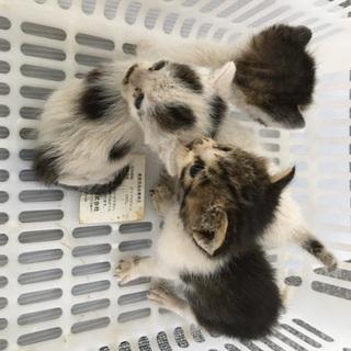仔猫を可愛がってくれる方を探しています(2匹は決まりました)