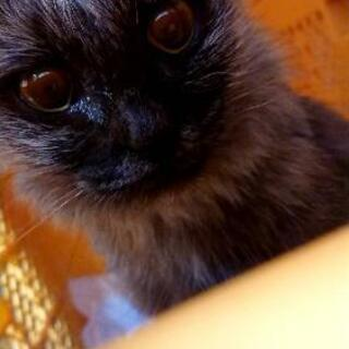 野良猫ちゃん(♀)7ヶ月