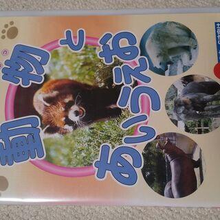 動物とあいうえお DVD