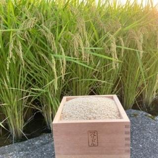 富山県産令和元年コシヒカリ3kg1000円税込