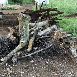 廃材 梨の木