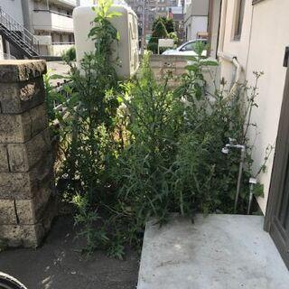 ☆庭や空き地などの雑草を草取りをして、スッキリしませんか!