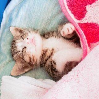 【急募】生後10日~2週間の子猫