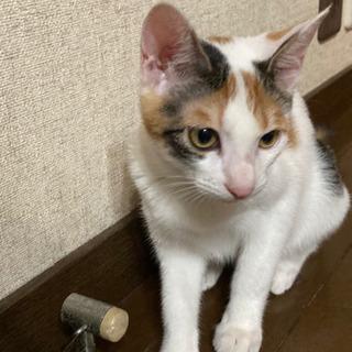 【至急】三毛猫(再投稿) - 邑楽郡