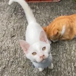 お外で暮らしている子猫達 − 山口県