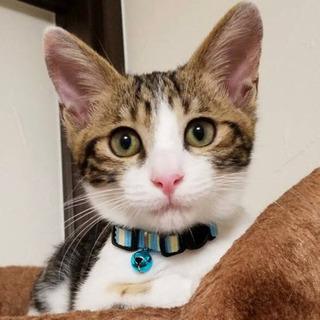 【全員譲渡先決定しました】4ヶ月の子猫3匹♂里親募集しています!