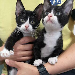 ※問い合わせ多数のため一時中断中m(_ _)m 人馴れバッチリ❗元気いっぱいの生後3ヶ月🐱4兄弟の家族募集♥️※申し込みいただく際は最後までお読み頂き、質問事項の回答もご記入くださるようお願い致します。 - 猫