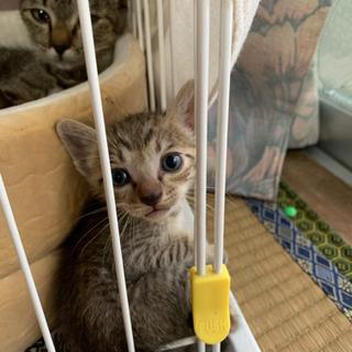 子猫3匹と母猫の里親募集!