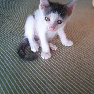 子猫の赤ちゃん