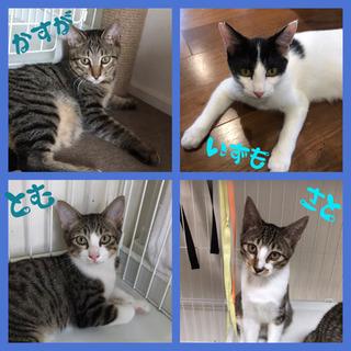9/5(土)  保護猫☆譲渡会 開催