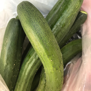 ①野菜 きゅうり キュウリ 胡瓜 5本位