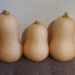 【農薬不使用】バターナッツカボチャ※インテリアにもオススメ