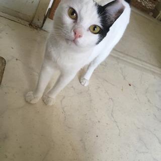 性格 すごく良い。花丸 小さめ かわいいメス猫