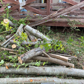 薪になる切ったばかりの木