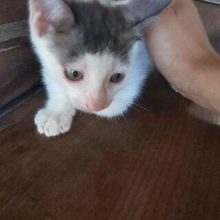 子猫の赤ちゃん3ヶ月