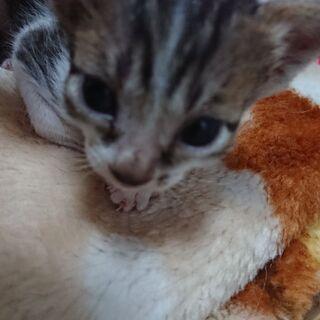 野良猫が産み捨てた子を保護