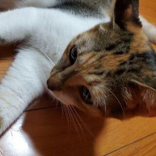 甘えたさんです - 猫