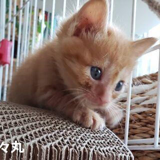 (一時募集停止)生後1ヶ月♡可愛い~4兄妹 - 猫