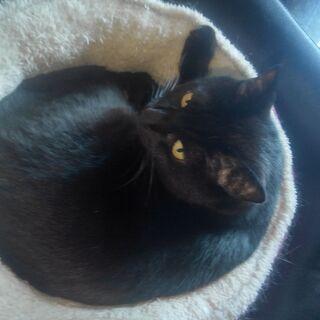 黒猫のマシュー、主人を亡くして寂しがっています