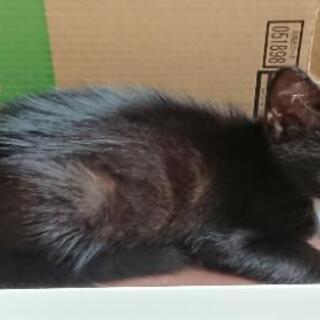 応募ストップさせていただきます。片眼だけど幸せにしてほしい💓甘えん坊の黒猫 - 市原市