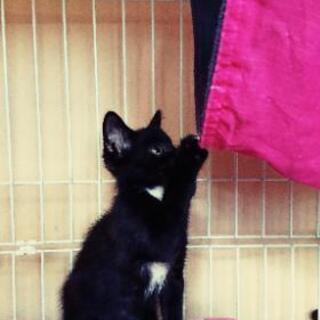 応募ストップさせていただきます。片眼だけど幸せにしてほしい💓甘えん坊の黒猫 − 千葉県