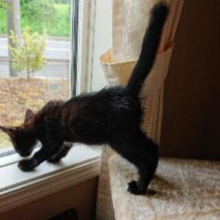 応募ストップさせていただきます。片眼だけど幸せにしてほしい💓甘えん坊の黒猫 - 里親募集