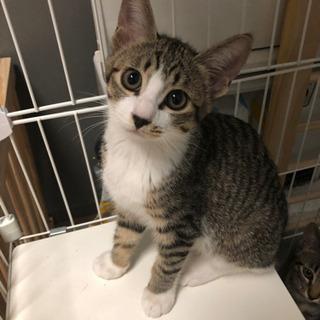 ご家族決定しました!(メス)3ヶ月野良子猫 メィ - 猫