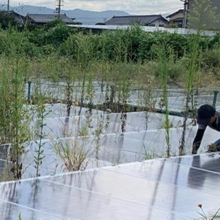太陽光発電所の草刈り(鎌での手刈作業)