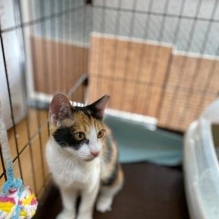 抱っこ大好きな三毛猫 − 福岡県
