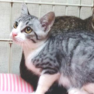 海っこ3兄弟!鼻ピンクのサバシロ♡ナツくん 3ヶ月