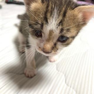 ハンデのある子猫キジ白ちゃん