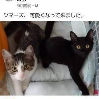 現在御話し中 キジ白と黒猫の兄弟です😊