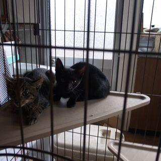 生後5か月程 猫3匹 里親募集