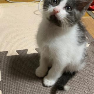 可愛い2ヶ月くらいの子猫♪