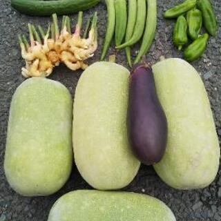 真夏野菜6点盛り