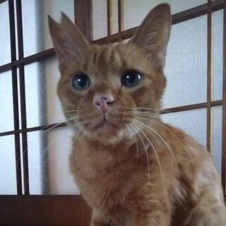 自ら家に入ってきて家猫になりたいとアピールしてきた茶太郎くん